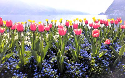 wibracje bieli… niedziela  2 kwietnia. Kolory dnia