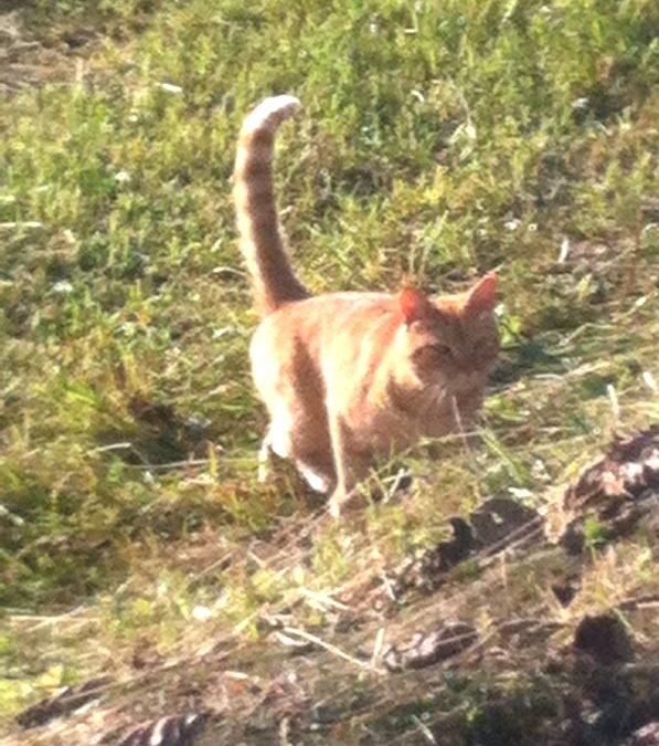 Kotek… tygryskiem. Ryszard Lwie Serce
